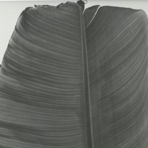 Hoja de platano, 1992
